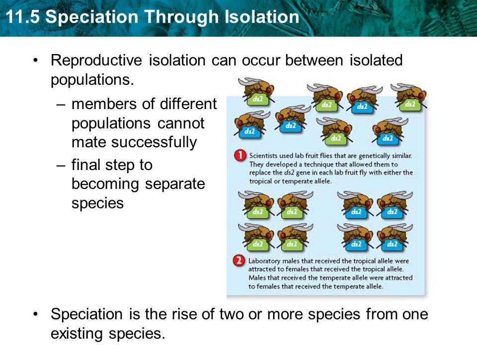 Reproductive isolation can occur between isolated populations.