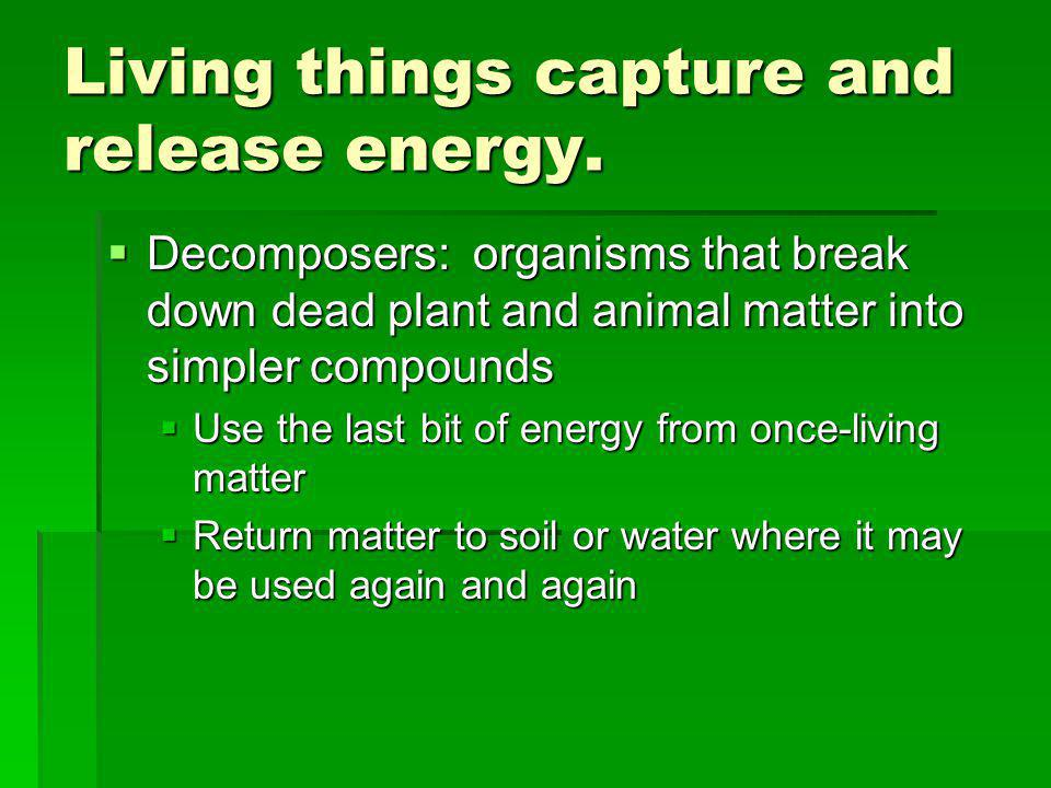 Living things capture and release energy.