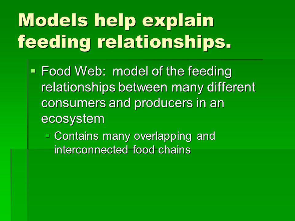 Models help explain feeding relationships.