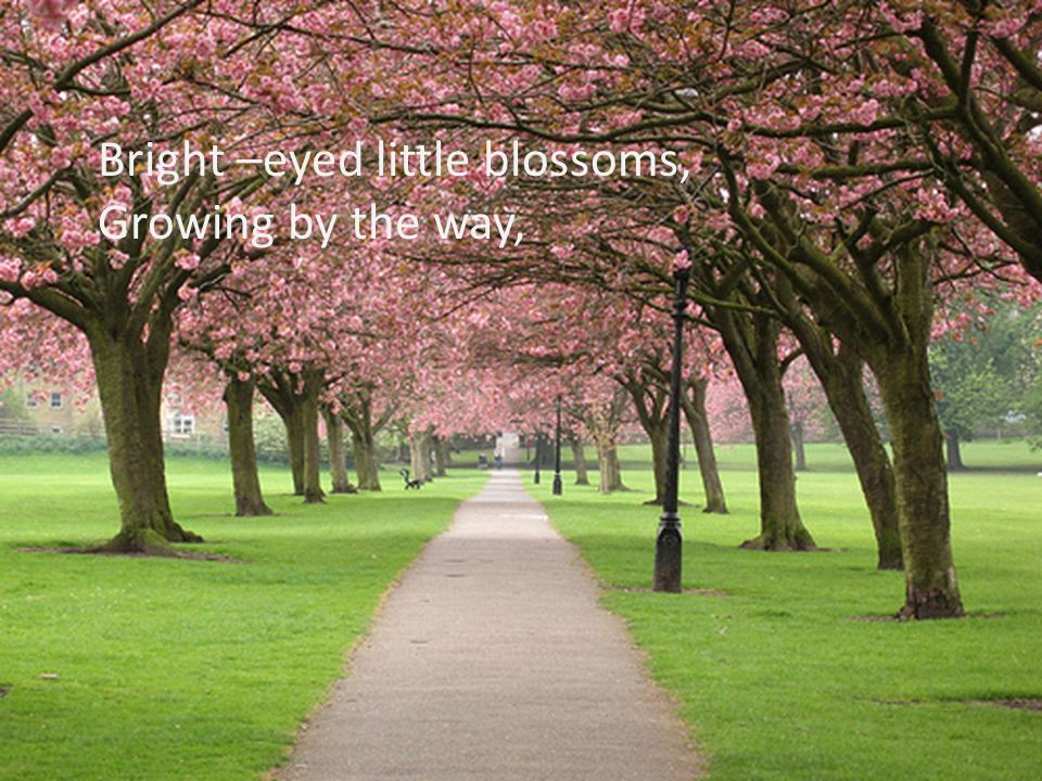 Bright –eyed little blossoms,