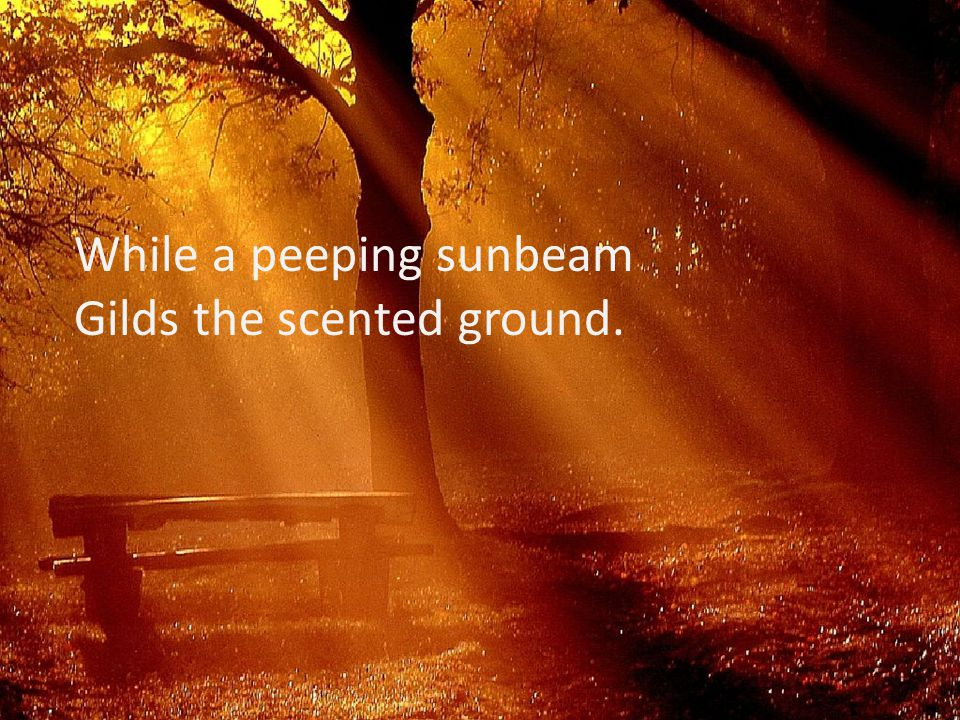 While a peeping sunbeam