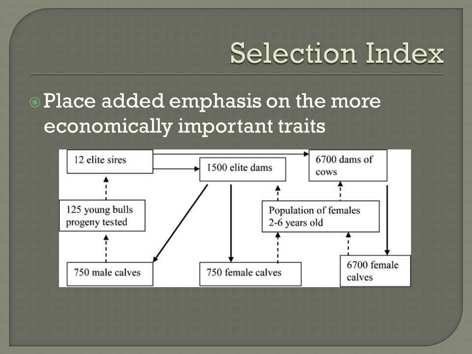 Selection Index Place added emphasis on the more economically important traits