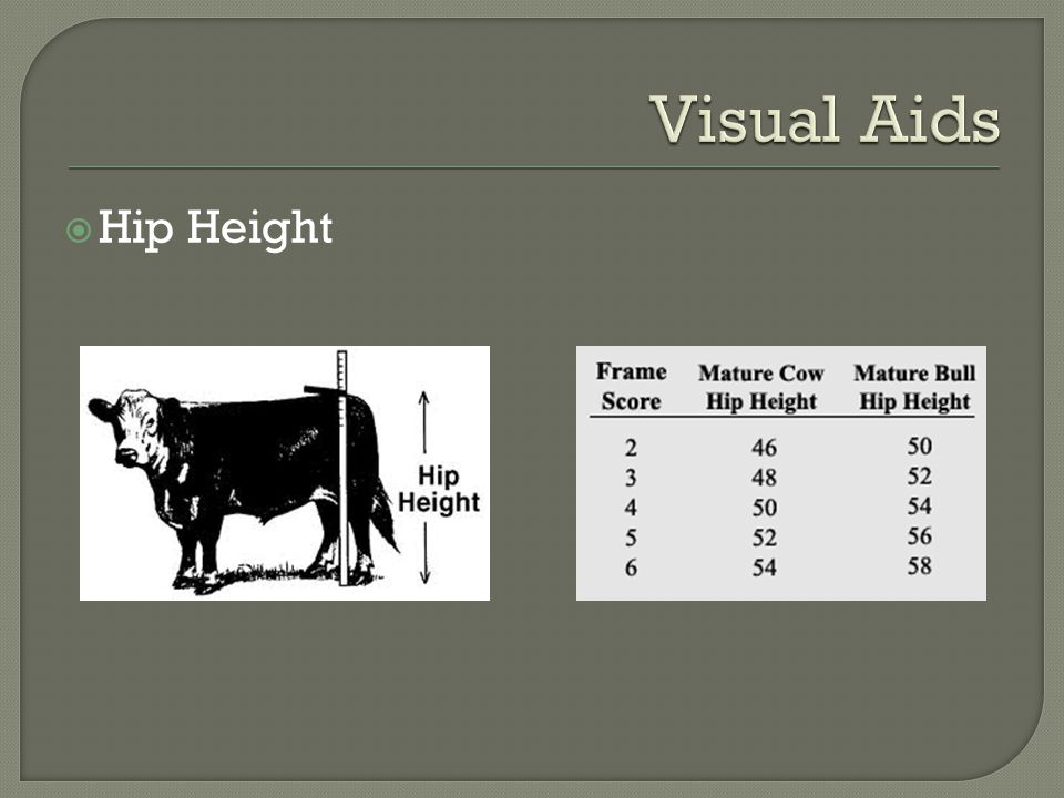 Visual Aids Hip Height