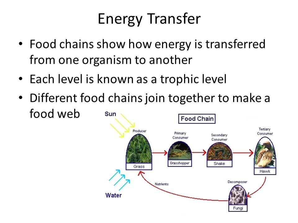 Energy Transfer Food chains show how energy is transferred from one organism to another. Each level is known as a trophic level.