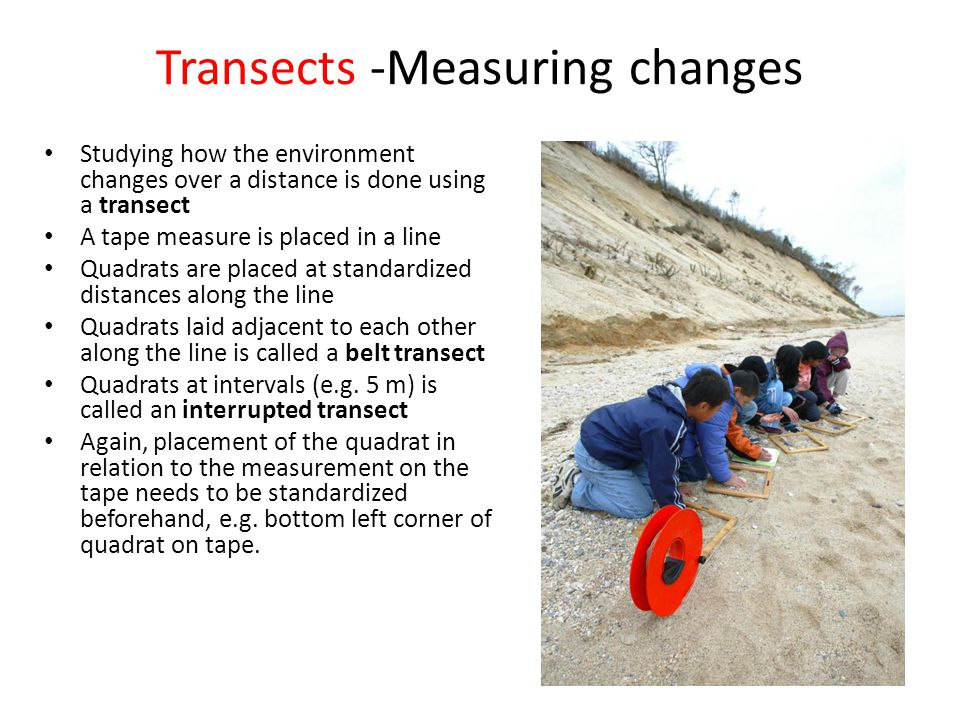 Transects -Measuring changes