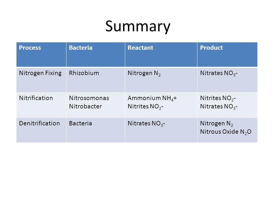 Summary Process Bacteria Reactant Product Nitrogen Fixing Rhizobium