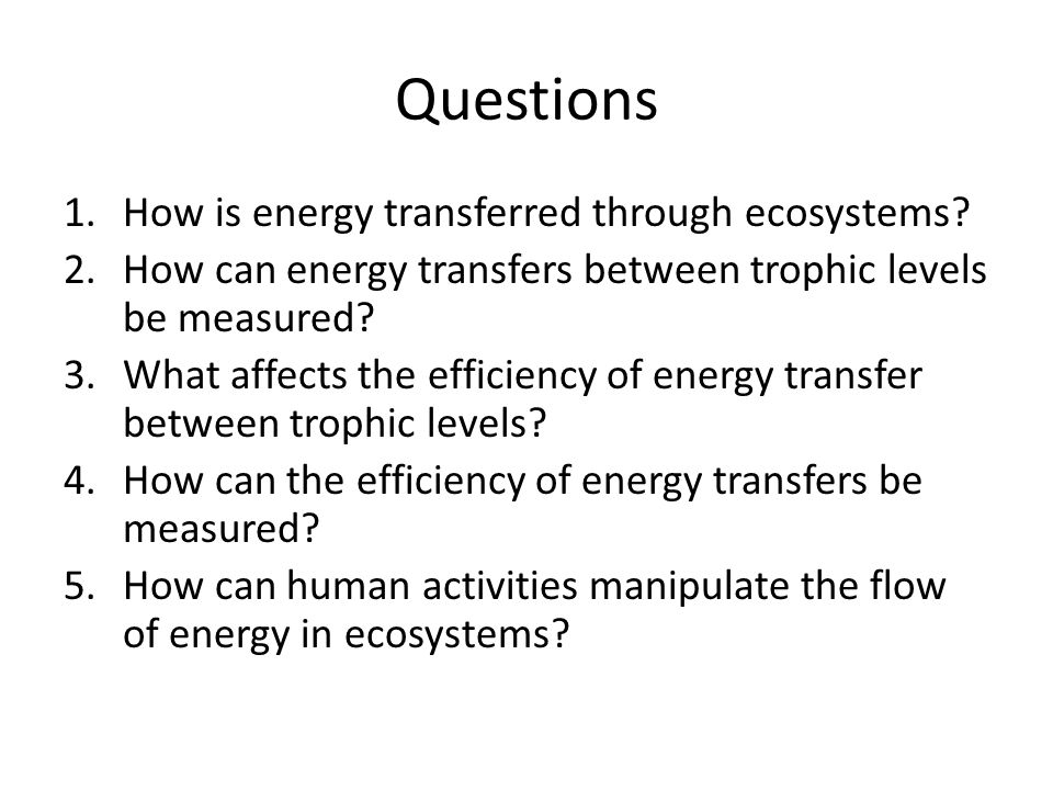 Questions How is energy transferred through ecosystems