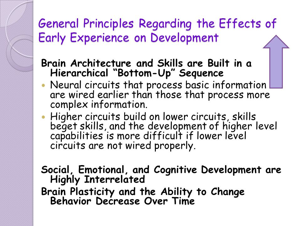 the ten principles and brain development One of the fundamental principles underlying neuroplasticity is based on the neuroplasticity is involved in the development of sensory function the brain is born.