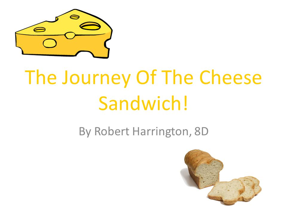 The Journey Of The Cheese Sandwich!