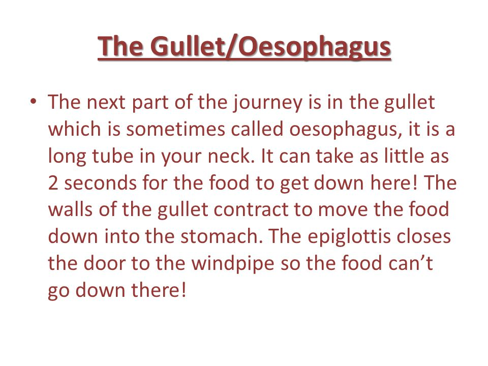 The Gullet/Oesophagus