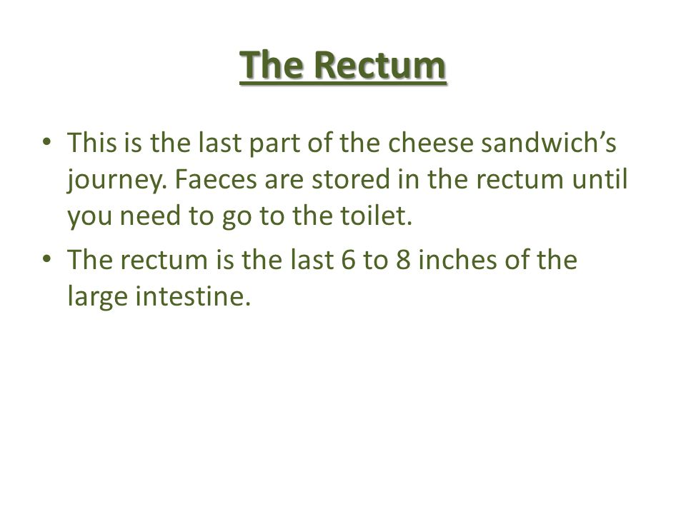The Rectum This is the last part of the cheese sandwich's journey. Faeces are stored in the rectum until you need to go to the toilet.