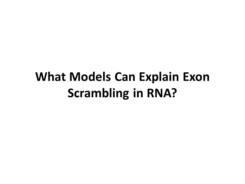 What Models Can Explain Exon Scrambling in RNA