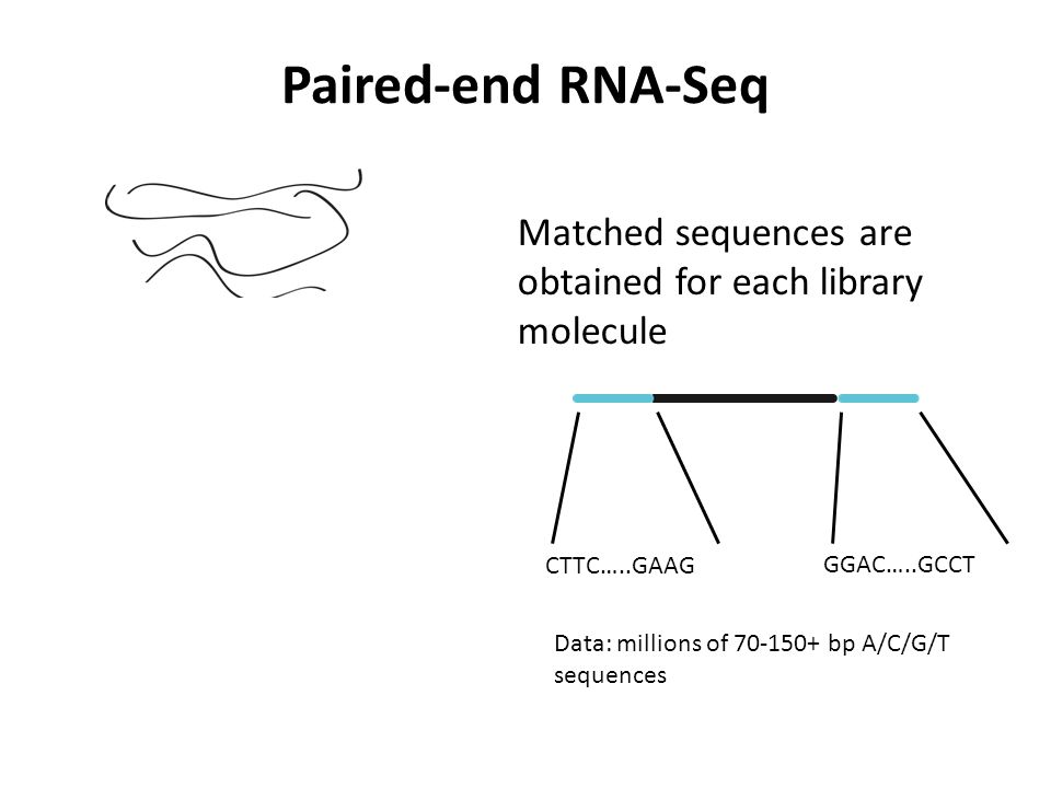 Paired-end RNA-Seq Matched sequences are obtained for each library molecule. CTTC…..GAAG. GGAC…..GCCT.
