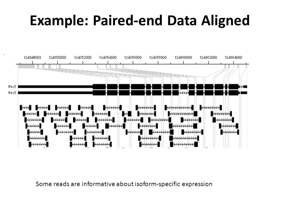 Example: Paired-end Data Aligned
