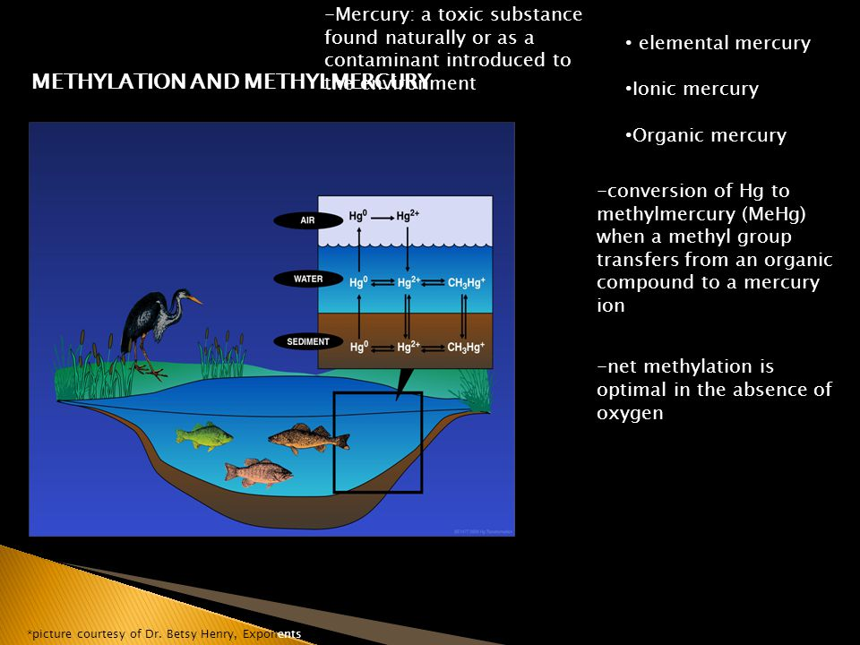 METHYLATION AND METHYLMERCURY