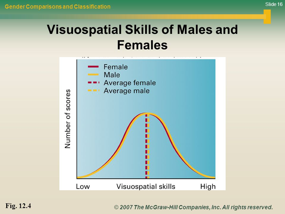 Visuospatial Skills of Males and Females