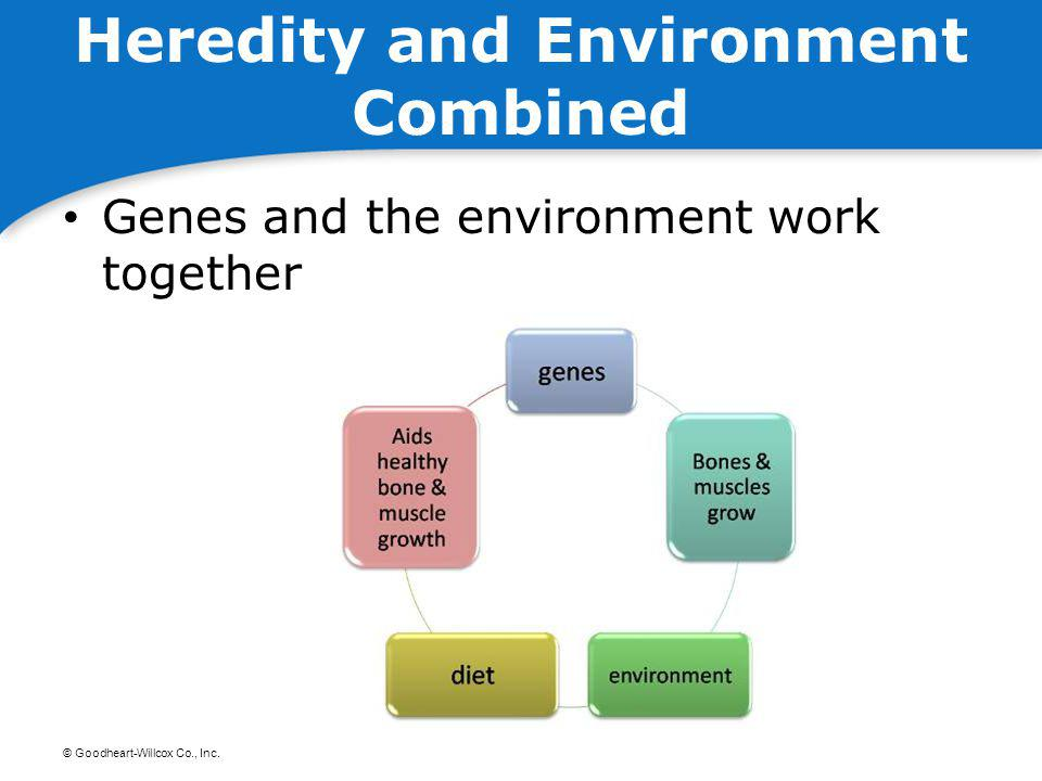Heredity and Environment Combined