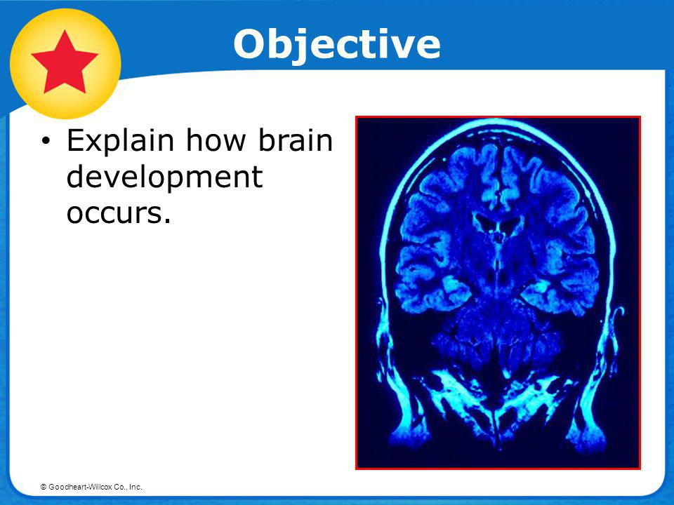 Objective Explain how brain development occurs.