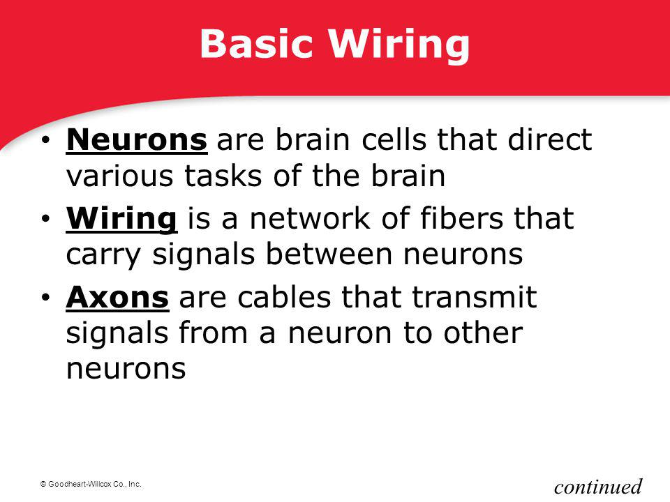 Basic Wiring Neurons are brain cells that direct various tasks of the brain. Wiring is a network of fibers that carry signals between neurons.