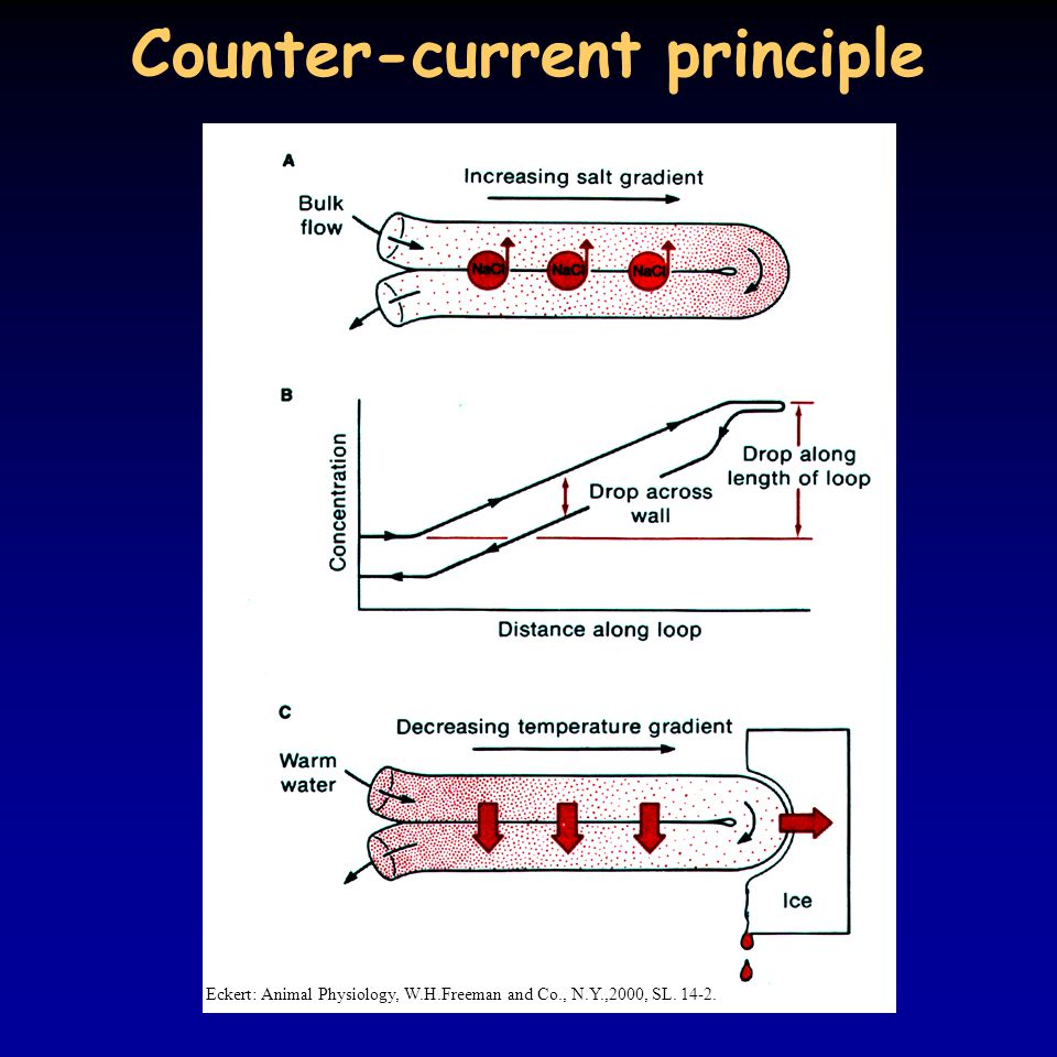 Counter-current principle