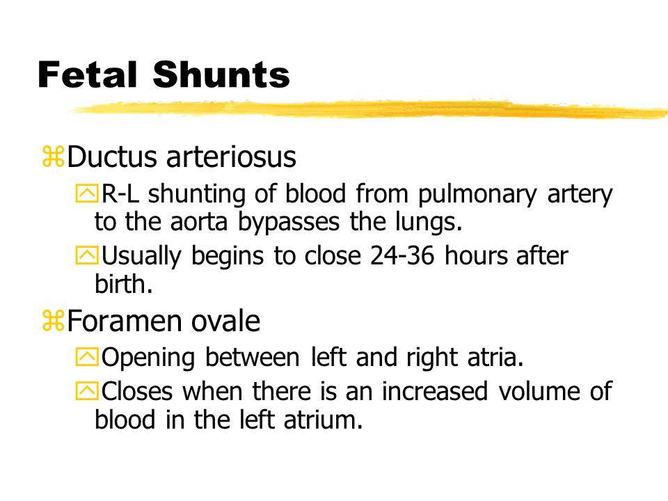 Fetal Shunts Ductus arteriosus Foramen ovale