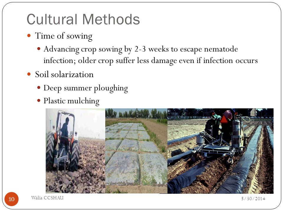 Cultural Methods Time of sowing Soil solarization