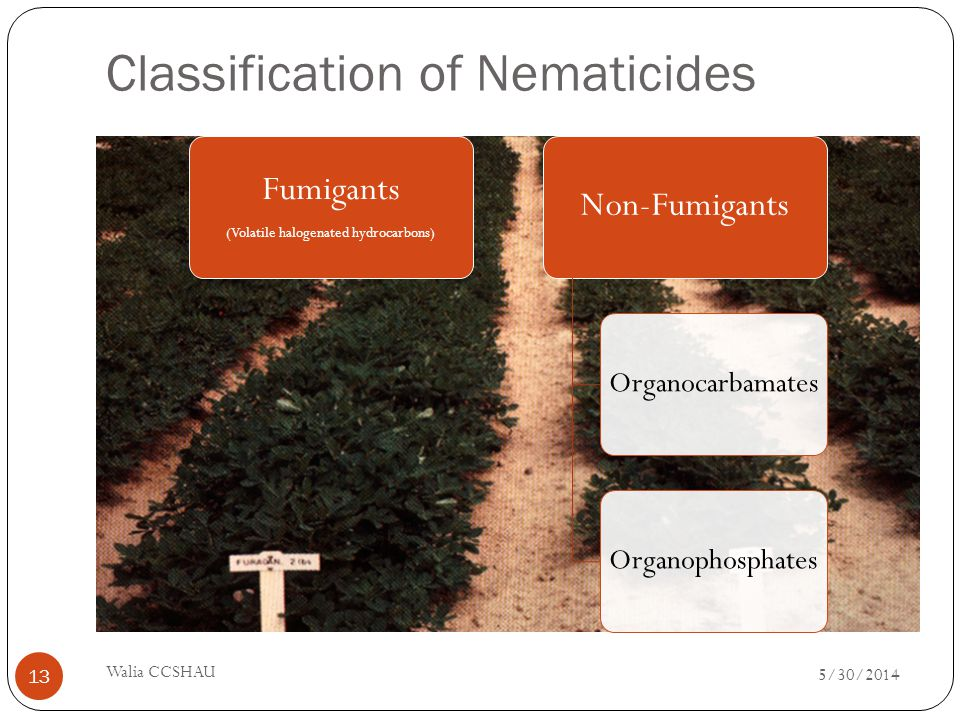 Classification of Nematicides