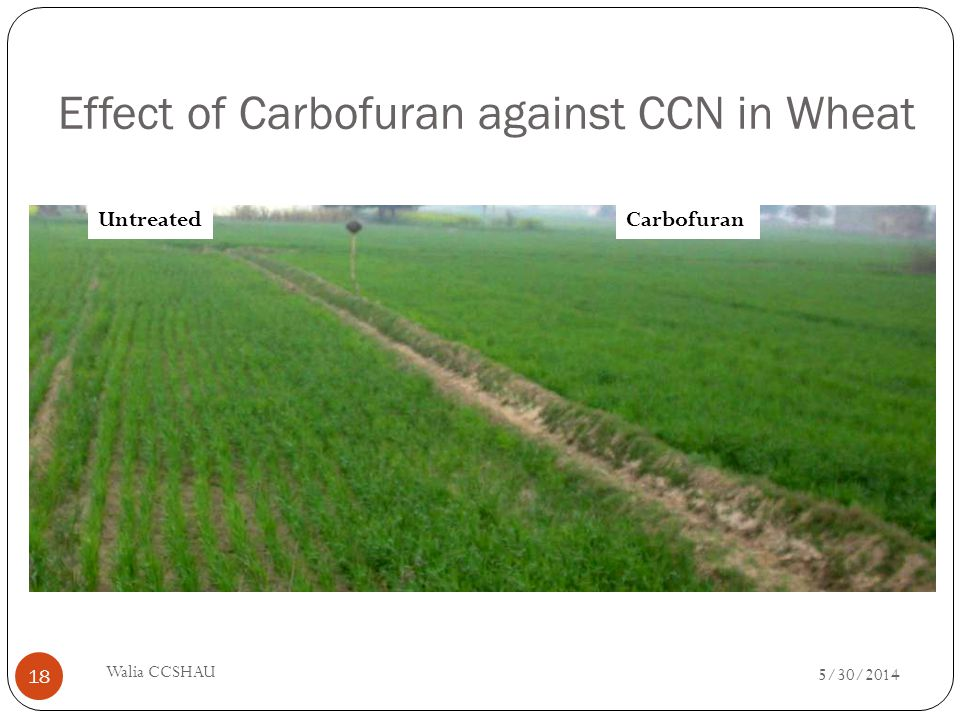Effect of Carbofuran against CCN in Wheat