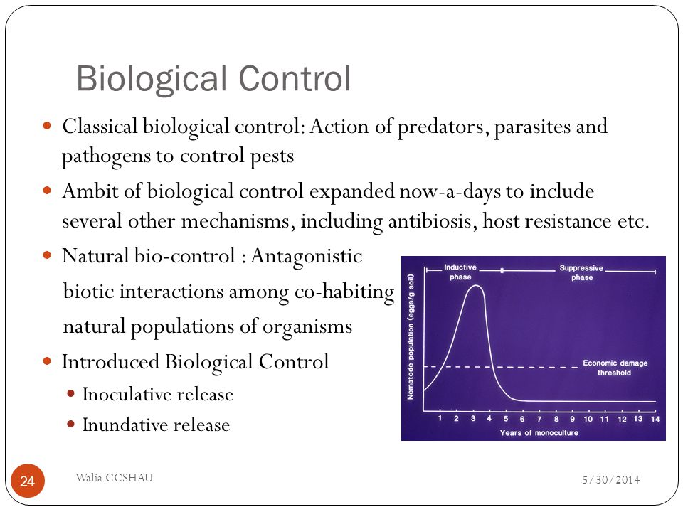 Biological Control Classical biological control: Action of predators, parasites and pathogens to control pests.