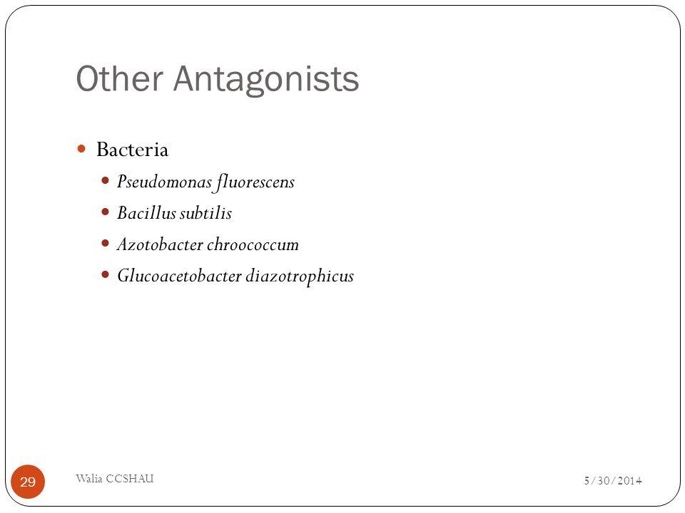 Other Antagonists Bacteria Pseudomonas fluorescens Bacillus subtilis