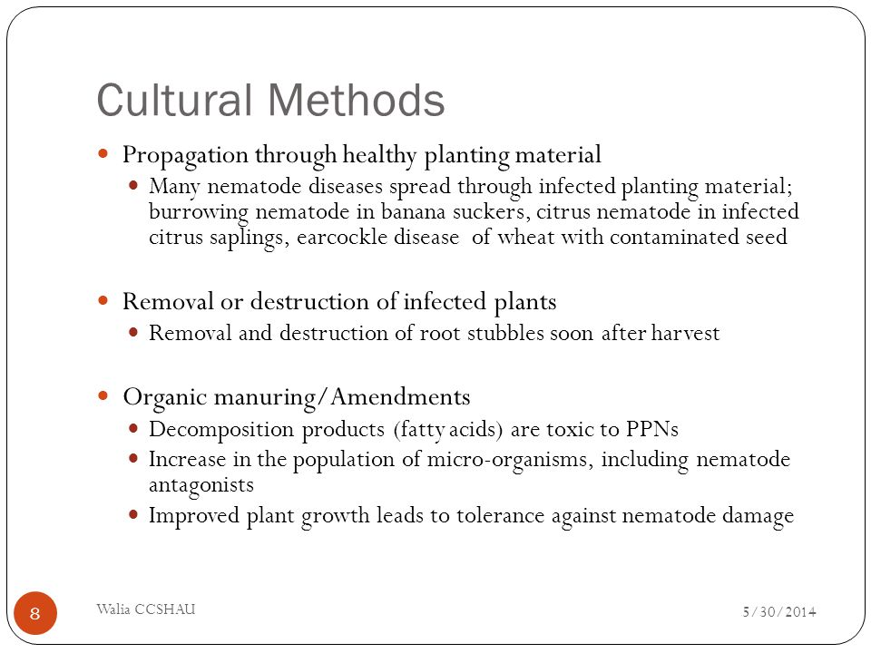 Cultural Methods Propagation through healthy planting material