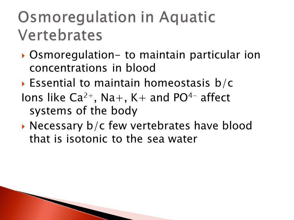 Osmoregulation in Aquatic Vertebrates