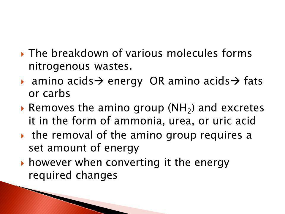 The breakdown of various molecules forms nitrogenous wastes.