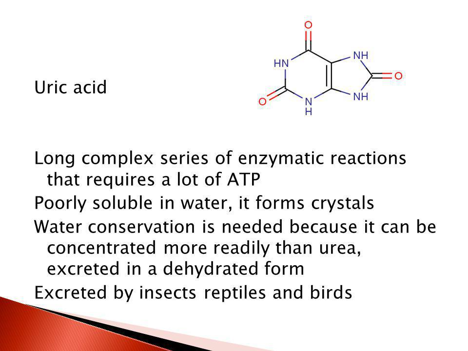 Uric acid Long complex series of enzymatic reactions that requires a lot of ATP Poorly soluble in water, it forms crystals Water conservation is needed because it can be concentrated more readily than urea, excreted in a dehydrated form Excreted by insects reptiles and birds