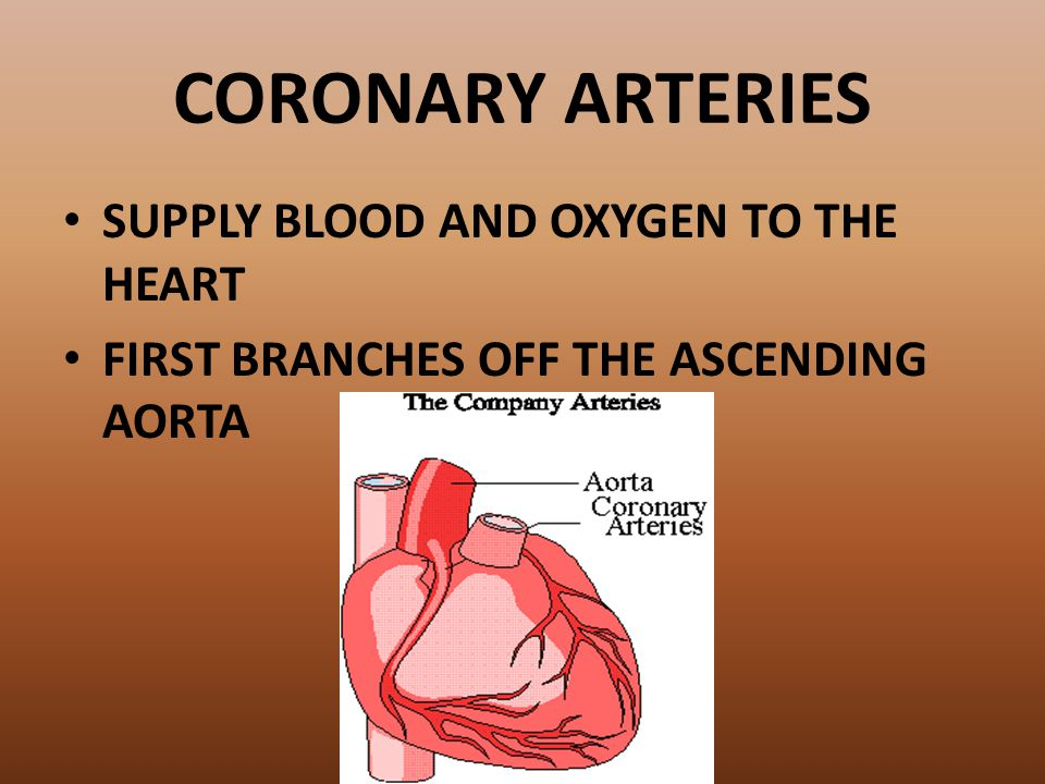 CORONARY ARTERIES SUPPLY BLOOD AND OXYGEN TO THE HEART