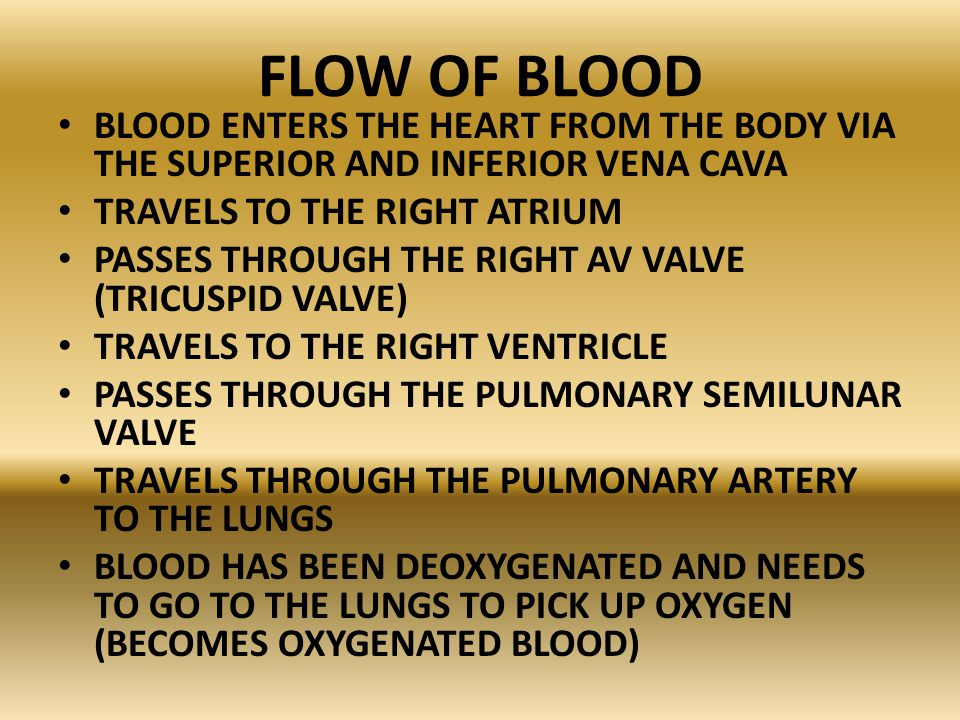 FLOW OF BLOOD BLOOD ENTERS THE HEART FROM THE BODY VIA THE SUPERIOR AND INFERIOR VENA CAVA. TRAVELS TO THE RIGHT ATRIUM.