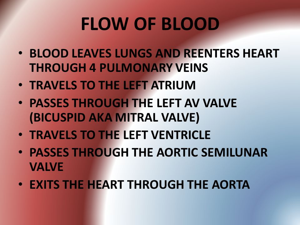 FLOW OF BLOOD BLOOD LEAVES LUNGS AND REENTERS HEART THROUGH 4 PULMONARY VEINS. TRAVELS TO THE LEFT ATRIUM.