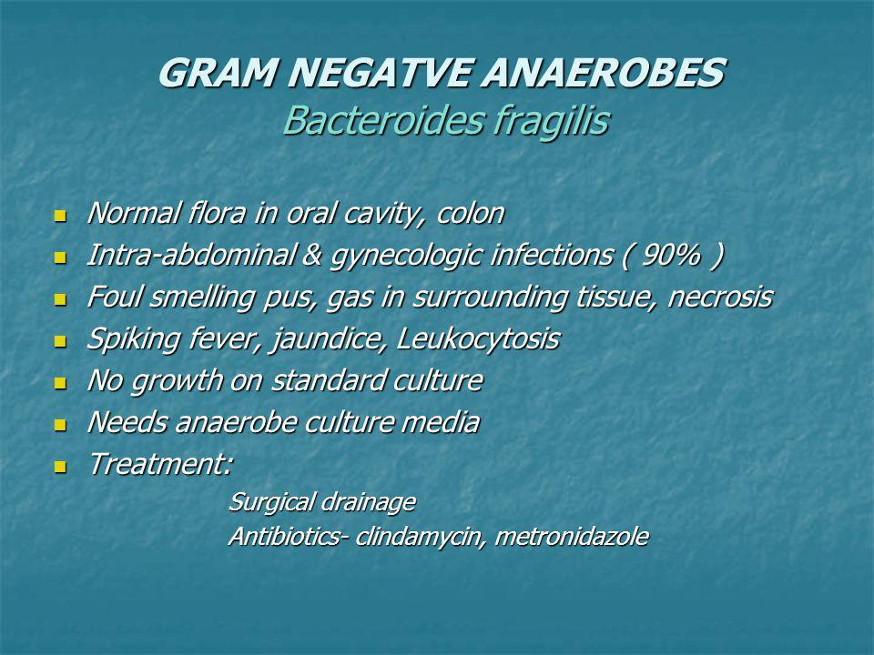GRAM NEGATVE ANAEROBES Bacteroides fragilis
