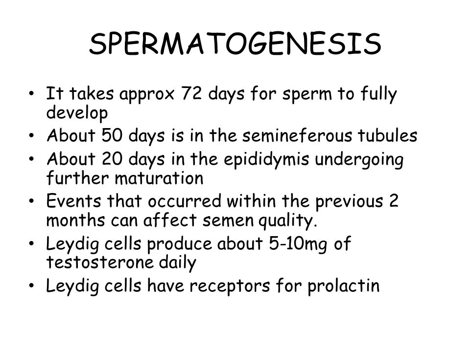 SPERMATOGENESIS It takes approx 72 days for sperm to fully develop