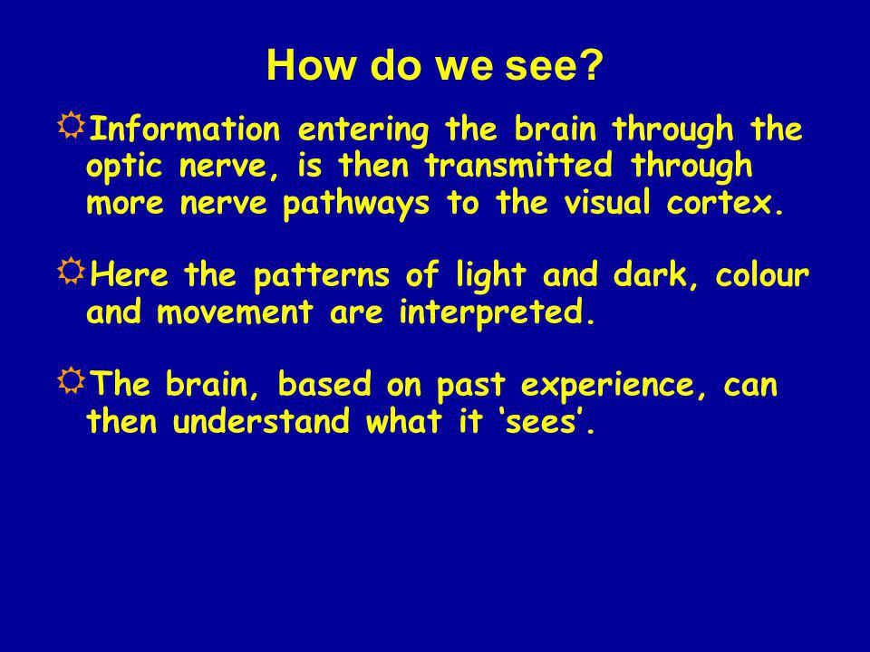 How do we see Information entering the brain through the optic nerve, is then transmitted through more nerve pathways to the visual cortex.