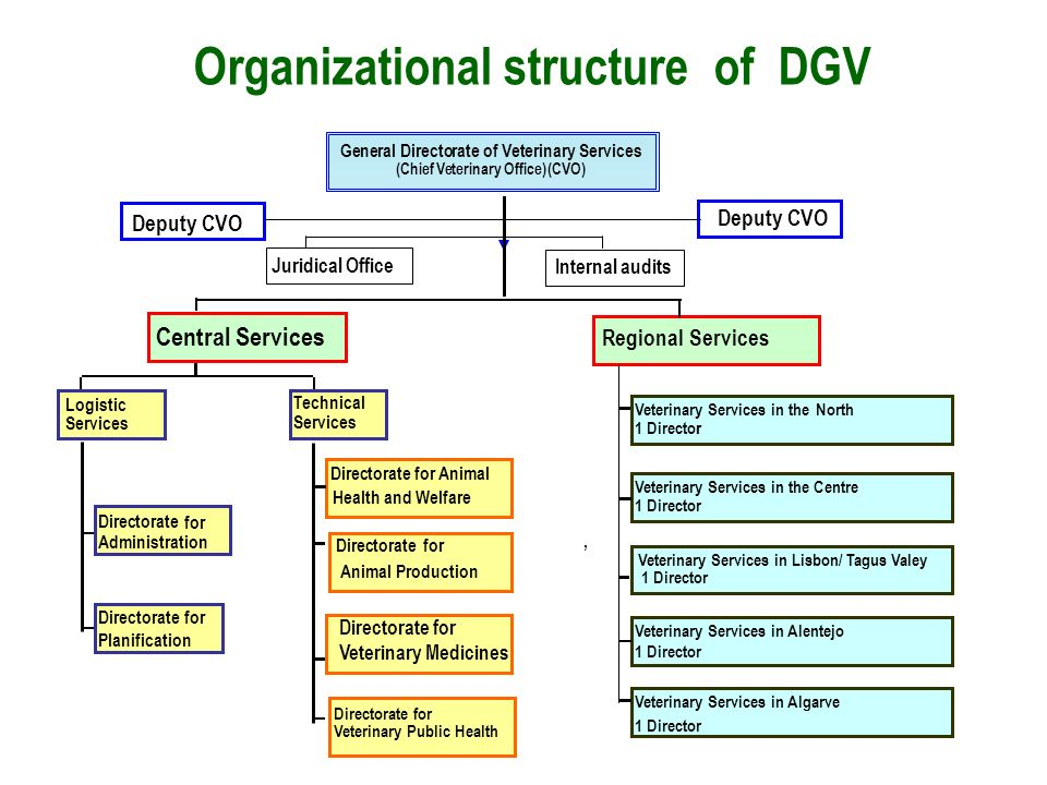 Organizational structure of DGV