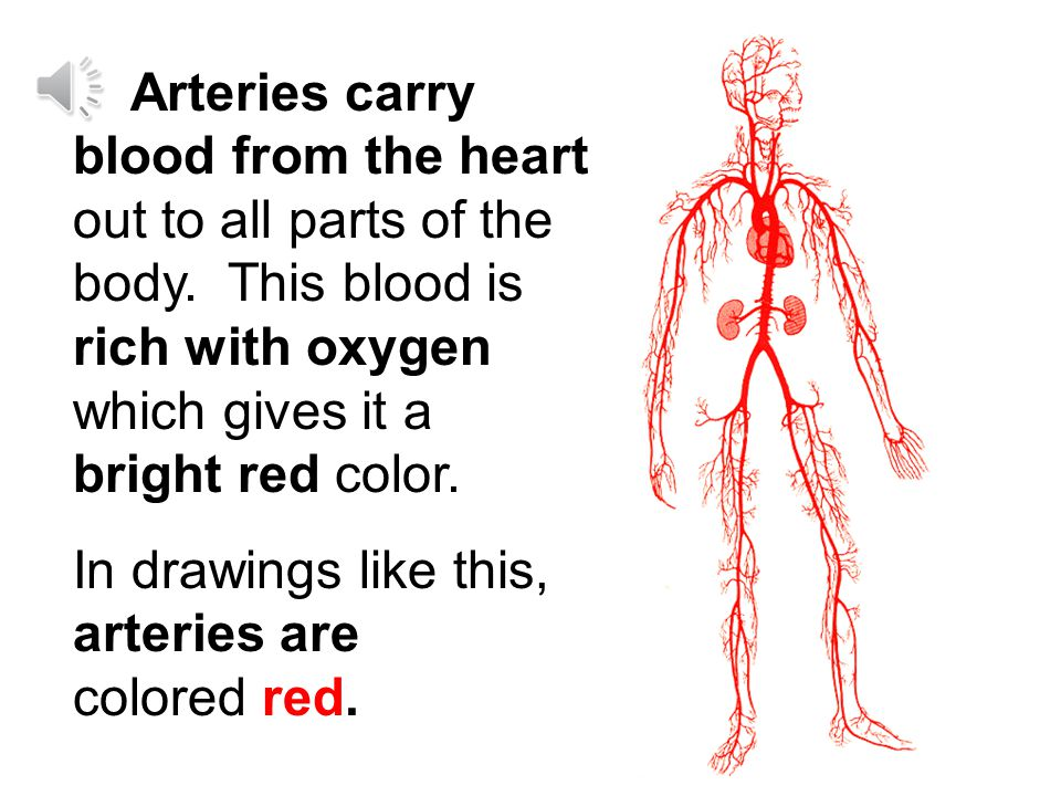 Arteries carry blood from the heart out to all parts of the body