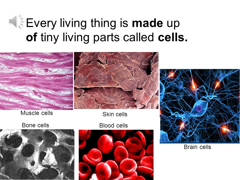 Every living thing is made up of tiny living parts called cells.