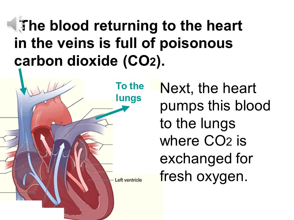 The blood returning to the heart in the veins is full of poisonous carbon dioxide (CO2).