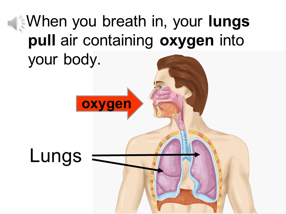 When you breath in, your lungs pull air containing oxygen into your body.