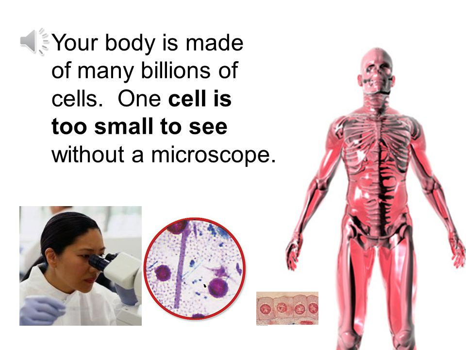 Your body is made of many billions of cells