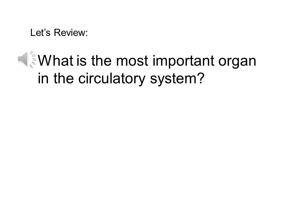What is the most important organ in the circulatory system