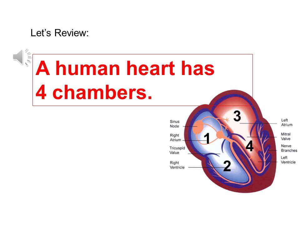 A human heart has 4 chambers.