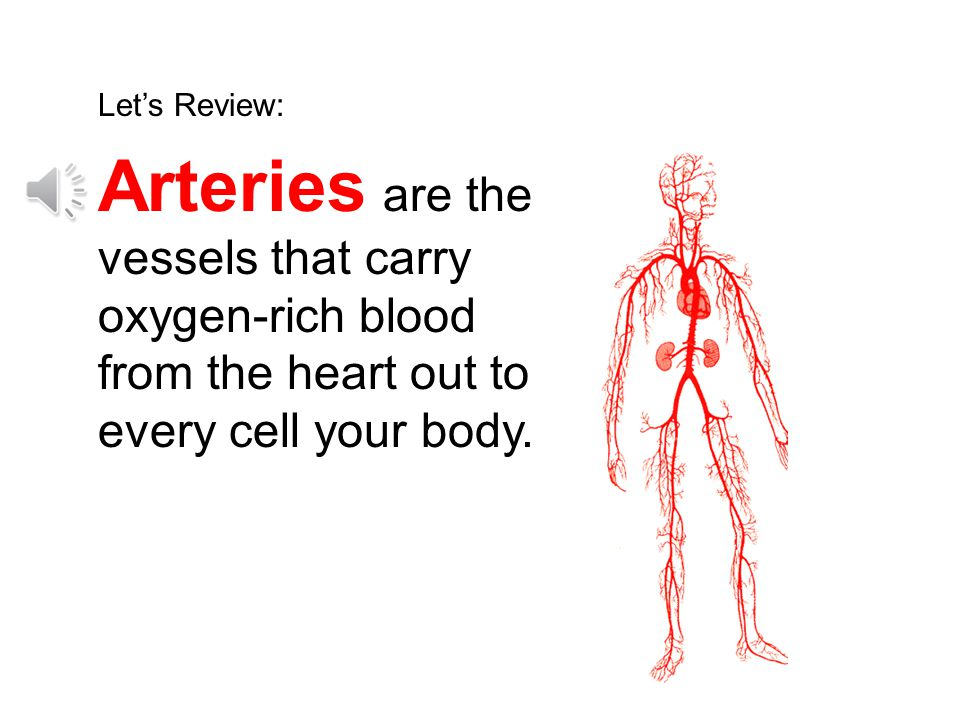 Let's Review: Arteries are the vessels that carry oxygen-rich blood from the heart out to every cell your body.