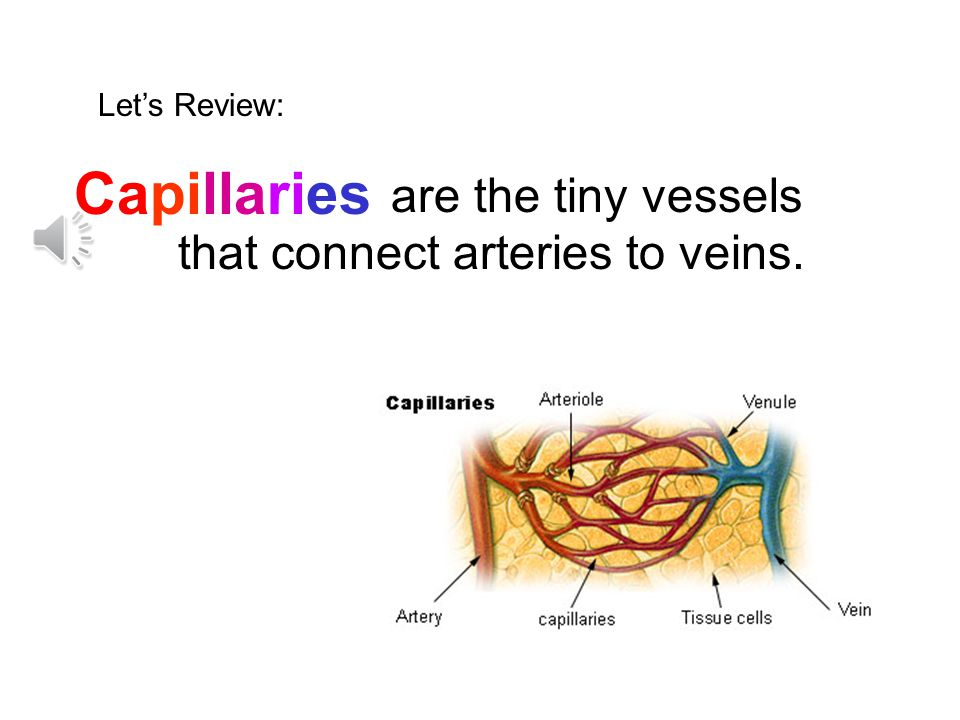 Capillaries are the tiny vessels that connect arteries to veins.